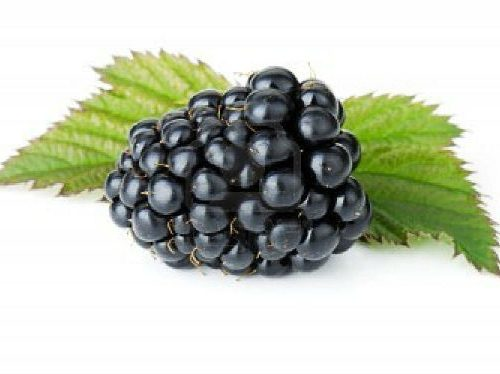 Blackberry fruit to illustrate a B2C product